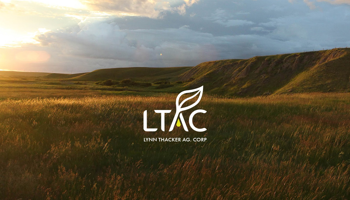 ltac-lynn-thacker-corporate-identity-01